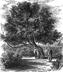 fig tree in ancient times