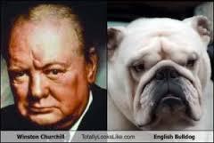 churchill & bulldog